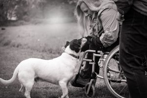 disabled person in wheelchair with dog